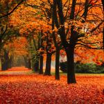 Nouvel horaire – automne 2020